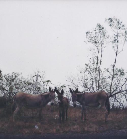 where I was surprised to find a family of burros, and...