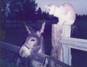 My burro Andy and Magnus - Andy died four months after Ping in 2002.